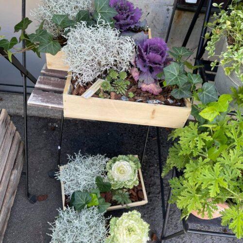 Krukväxter & Planteringar
